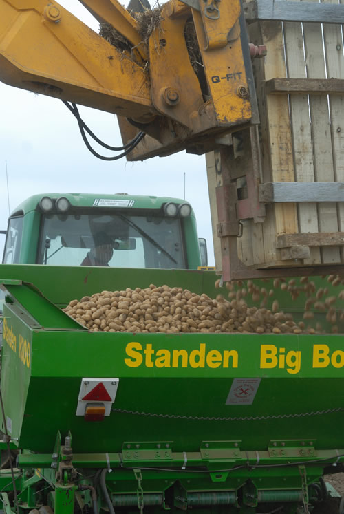 Potato seed loading planter