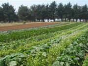 """""""There are clear opportunities for organic farming – the organic market is in the fourth year of sustained growth"""""""