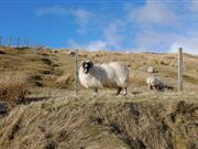 Upland farmers voice RPA concerns, saying their business could be 'compromised' due to payment failures