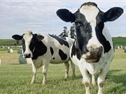 Milk Production Reduction Scheme was announced by Hogan as part of a €500m aid package for the dairy sector