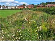 An example of an urban pollinator project in Leeds, West Yorkshire