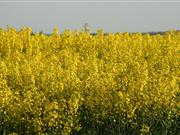 Think soil conditions, think water for OSR herbicides, says Frontier Crop Production