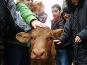 Disadvantaged children get farm visits boost thanks to landowners