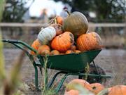 The farm has grown 90,000 pumpkins this year from 25 different varieties