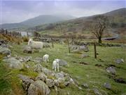 Welsh Lamb is desribed by many Italians as 'naturale, buono e genuino!'