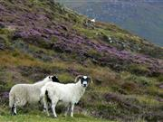 Passionate supporters of England's 'high value' upland areas meet to develop new post-Brexit ideas