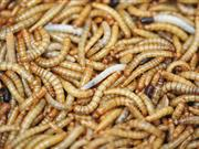 Farming Connect: Potential sources of protein for animal feed: Insects