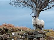 Brexit: Future of Welsh upland farming 'hanging in the balance'