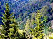 An industry worth half a billion: Wales launches forestry inquiry
