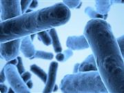 Antimicrobial resistance remains high and continues to show resistance, say EU report