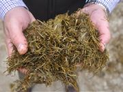 Surveys reveal importance of home-produced forage for farmers