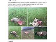 15 sheep killed due to loose dog on East Sussex farm