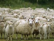 Quarantine Units to come into force in Wales on 12 June