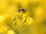 France says ban on neonicotinoids will go ahead in 2018