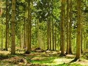 £13m fund to help farmers plant more trees, grants available