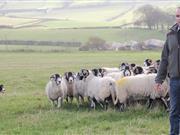 Lynx release could threaten rural livelihoods, warn National Sheep Association