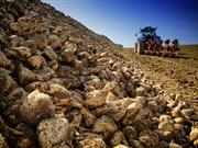 Competition aims to improve UK sugar beet yields