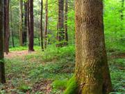 Grants worth thousands to provide farmers funding to grow woodland