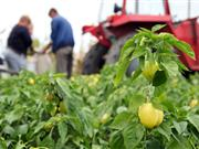 Future agricultural growth will be fuelled by overseas labour, NFU Deputy says