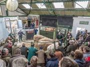 Survey to evaulate animal welfare provisions at 24 livestock markets