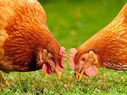 EU prepares itself for cases of bird flu this winter