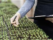 Lack of knowledge hindering development of 'essential' GM crops, scientists warn