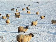 Farmers given advice as UK heads for deep freeze