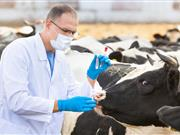UK animal health sector speaks of 'growing uncertainty' about future