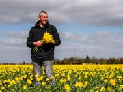 Growers achieve record daffodil harvest despite recent severe weather