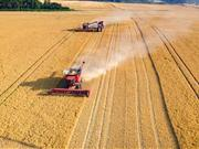 Rising demand for organic feed presents opportunities for arable farming
