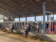 New £6m dairy research centre to open in Nottingham