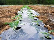 Scientists look at ways farmers can move away from 'damaging' plastic