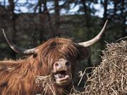 Scottish farmers urged to apply for grants to help promote local food