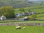 Small increase in sheep diagnosed with 'Wheelbarrow disease'