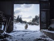 North Wales family farm photography series scoops top prize