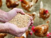 Egg producers call for 'desperately needed' price increase as feed costs surge