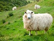 Room for improvement in wormer advice given to farmers, study shows