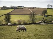 New £6m Sustainable Production Grant to open for Welsh farmers
