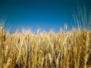 Scottish farmers reporting better than expected yields despite bad weather