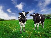 New report recognises progress in fight against major cattle diseases