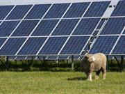 Farmers urged to jump on solar projects following comeback