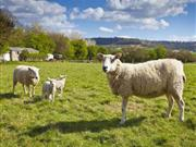 Farmers warned when importing animals from Bluetongue areas