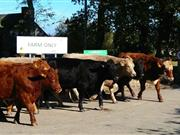 New app helps farmers finish cattle to retailers' specifications