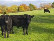 Scottish livestock farmers face mixed fortunes in run up to Christmas