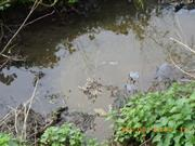 Dairy farmer ordered to pay £7000 after polluting stream