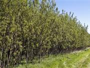 Swedish company funds UK farmers through biomass initiative