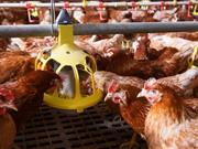 ForFarmers to shut down Blandford feed mill as part of 'reduction plan'