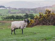 Sustainable Control of Parasites in Sheep seeks Chair Elect