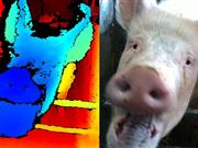 3D tech which detects emotional state of pigs could benefit farmers