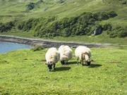 CAP payments worth £300m underway to Scottish farmers
